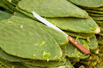 cactus nopal