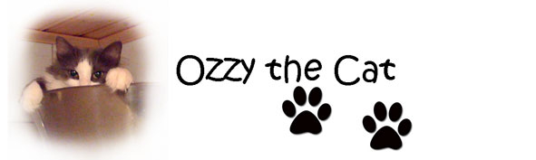 Ozzy the cat