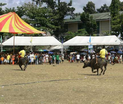 Carabao Race in kabanhawan 2009