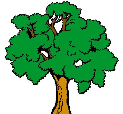 Todo cuanto me rodea ;D: Cuento--->El árbol confundido.