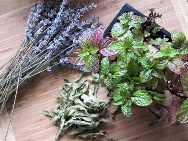 ... and other Food Adventures: Lavender, Lemon Verbena, and Mint Tea