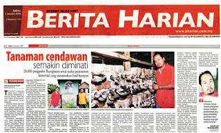 Anak Melayu Boleh di Berita Harian Tanam Cendawan