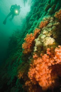 Turismo in canada super scuba diving - Dive per sempre ...