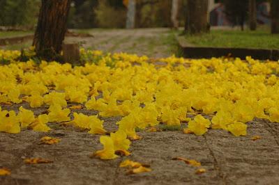 Primavera I