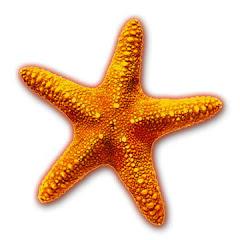 bintang laut
