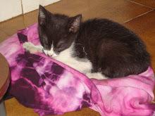 Chaninha - meu gatinho/A.