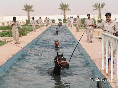 arábiga