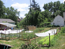 The Thomason Family Urban Farm