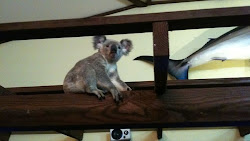 A koala walks into a bar to sleep it off