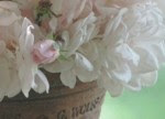 Blossom Sundries Blog