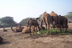Kamelekamelekamele