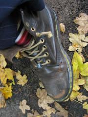 Herbst-Zeitlose