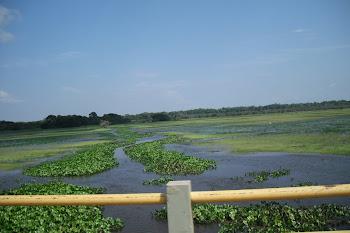 Rio Curiaú