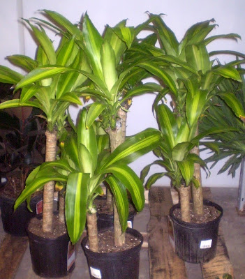 plants are the strangest people list houseplants which. Black Bedroom Furniture Sets. Home Design Ideas