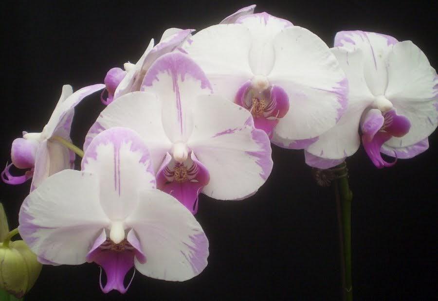 Orchid Point Way Vero Beach Fl