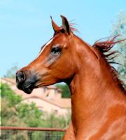 My Horsey (: