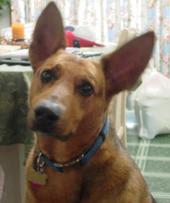 My Puppy 1995-2008