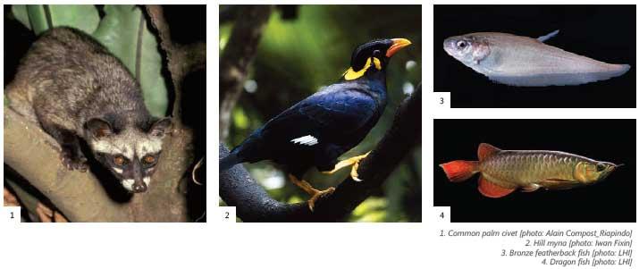 Bukit Tigapuluh National Park - Sumatera