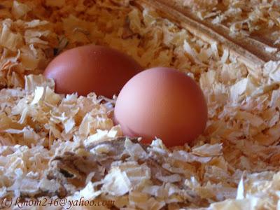 Eggs du jour