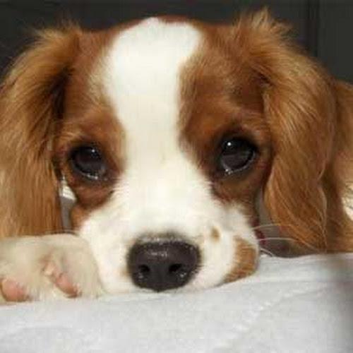 Koleksi Foto Anjing Cute Banget