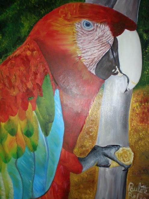 Guacamaya Bandera, (Ara Macao) Estado Guarico, Venezuela (Paulette Bello)