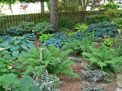 Shade Garden Ideas herbs and vegetables shade garden plans smart design tips and ideas for a shaded Shady Garden Designs On Shade Garden Ideas Hostas Photograph Shade Garden