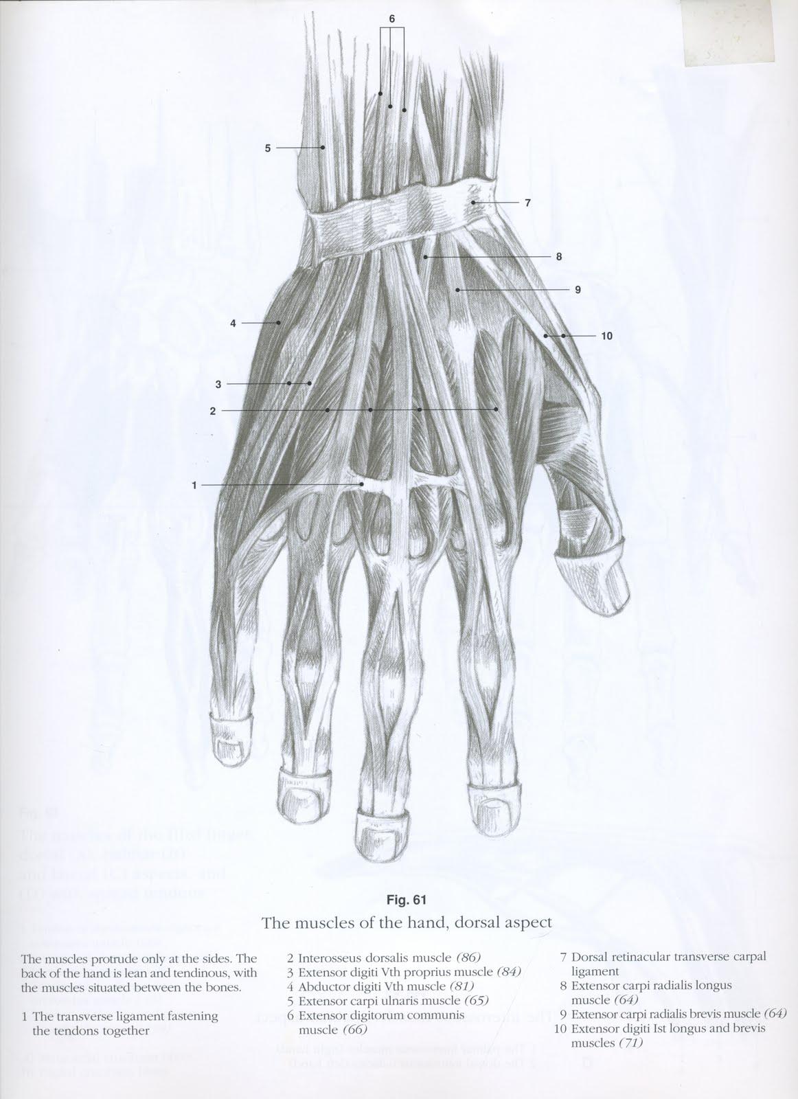 http://3.bp.blogspot.com/_ekfkiJWxZxE/TJpilK1C_II/AAAAAAAAAPo/k9miBDwSt_k/s1600/scan+hand+book.jpg