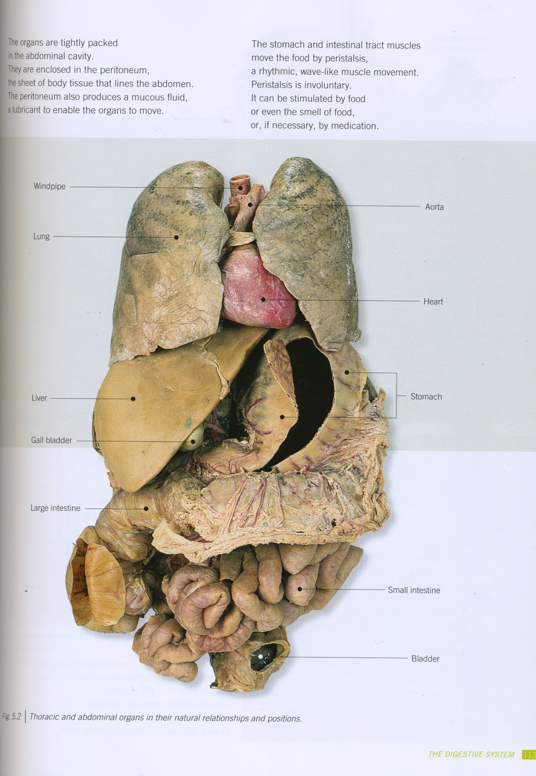 SkyGecko: human/ Frog Internal Anatomy Research