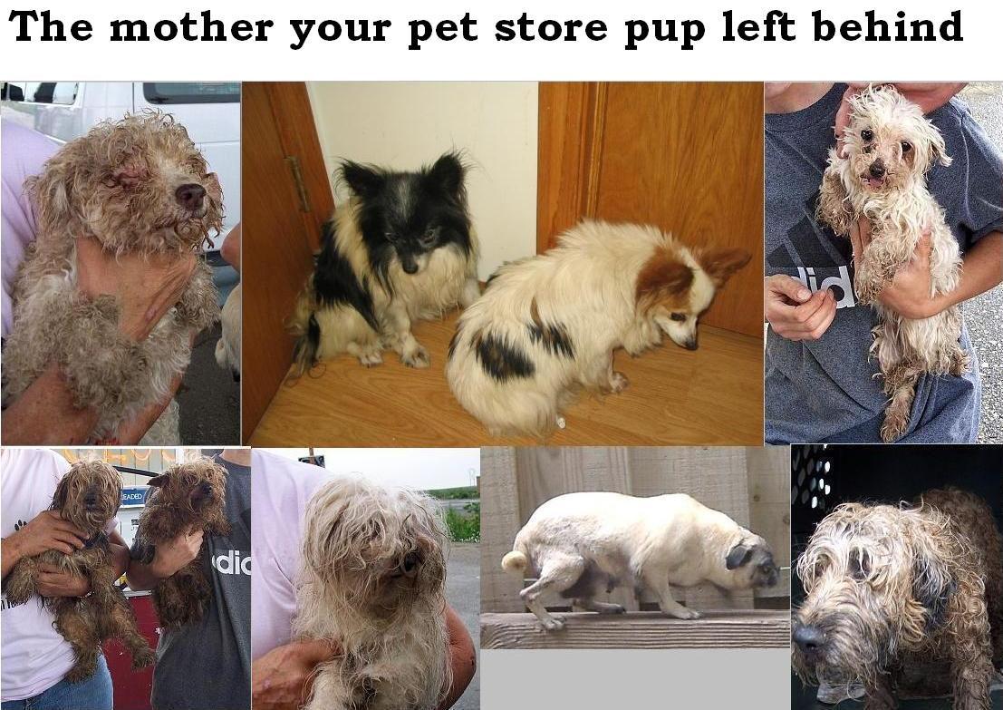 c 39 est la vie puppy mills a common sense approach