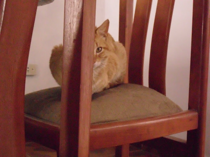 Calixto Matias, el gato paranoico