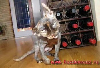 pisica cu prejudecati