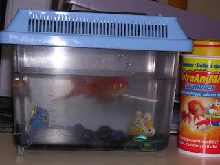 Des nouvelles de la classe mon poisson rouge for Aquarium poisson rouge changer l eau