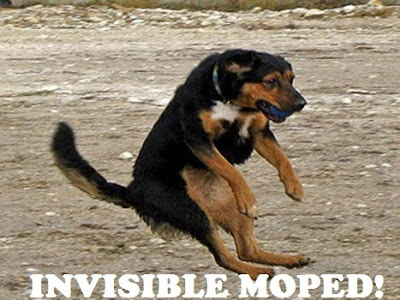 cute funny animals with quotes. Funny dog caught mid air!