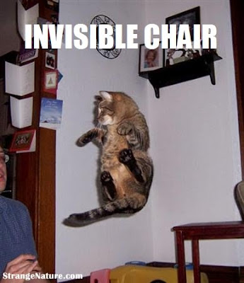 funny animal pictures with captions. invisible funny animals!
