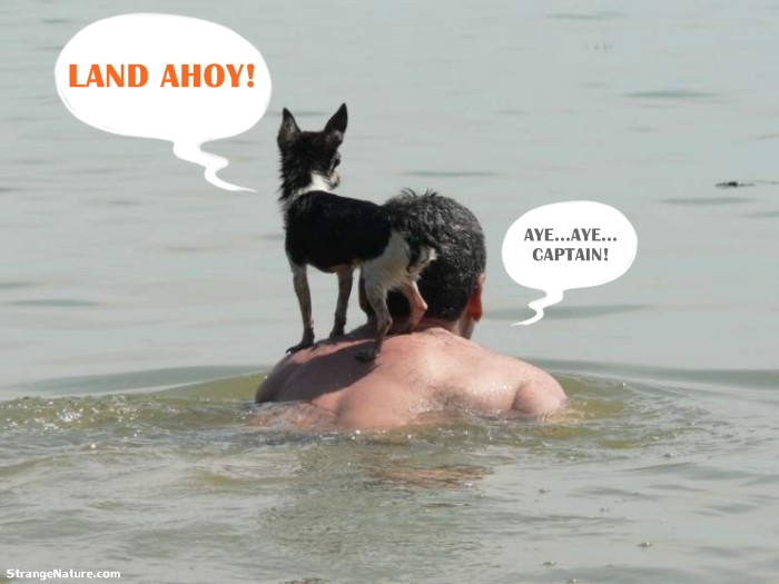 funny+swimming+animals+04.jpg