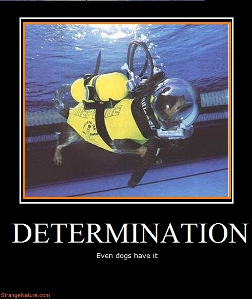 quotes on determination. quotes for determination.