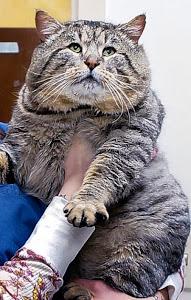 Fat Cat Explosion!