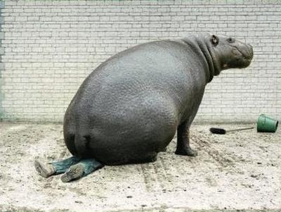 funny images of animals. Hippo got mad   Funny Animal