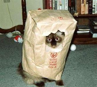 http://3.bp.blogspot.com/_en3tE7aKwk8/Sk9zDL7xZeI/AAAAAAAAAlg/lCU6hW0GKkU/s400/ninja+cat.jpg
