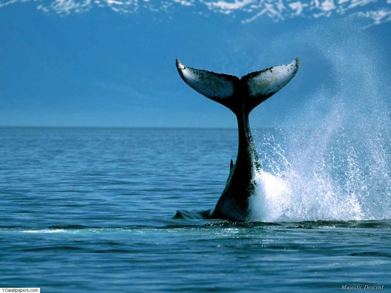 http://3.bp.blogspot.com/_enVLP57PrXw/TB8Z8fAc-iI/AAAAAAAAB1A/vXIU62I8pQQ/s1600/Ocean-Wallpaper-+_8_.jpg