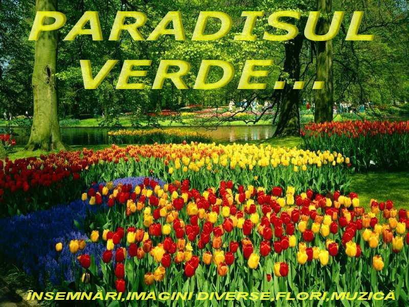 PARADISUL VERDE...