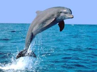 fotos de animales acuaticos - Viaje por el fondo del mar V (5 fotos de animales acuáticos