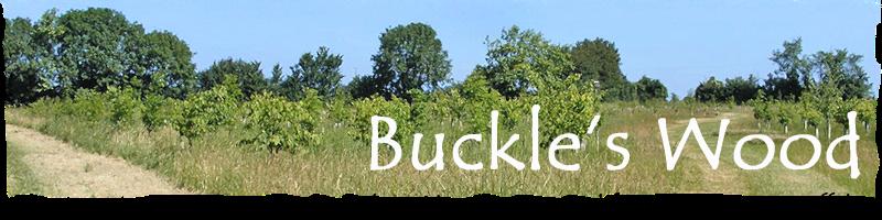 Buckle's Wood