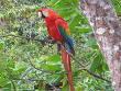 PARLAMENTO AMAZONICO