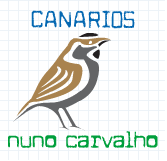 @@ N-CARVALHO @@