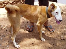 Victim of distemper