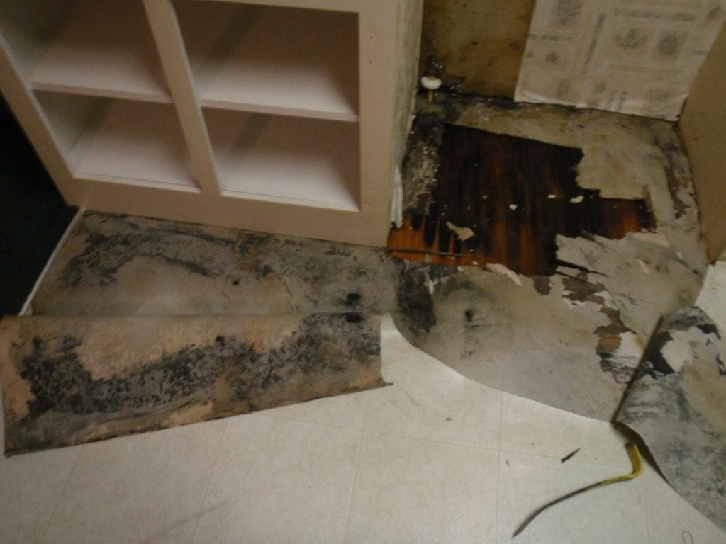 Mold caused by a water leak from a small slit in the refrigerator line