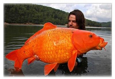 傳奇大金魚