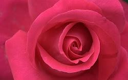 طيب - بس الورد البلدى برضه أحلى ورد فى الدنيا