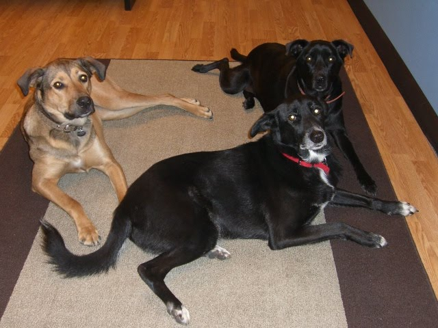 in San Diego and she had 2 brothers to hang out with (2 black dogs